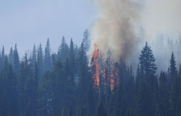 At around 3 p.m. on Sunday, July 22, the Bacon Rind Fire saw a few minor flare ups, which isn't surprising, according to an official with Custer Gallatin National Forest, who said that's typically the hottest, most fire-friendly part of the day.