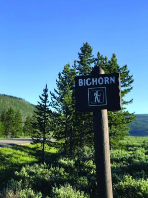 Head to the Bighorn Pass Trailhead (about 33 miles from Town Center) and look for monument plants blooming in the surrounding sagebrush on the way in and right next to the parking area.