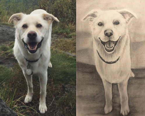 Buecking's pencil drawing of her friend's dog, Cooper. PHOTO COURTESY OF MEGAN BUECKING