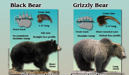 INFOGRAPHIC COURTESY OF BE BEAR AWARE