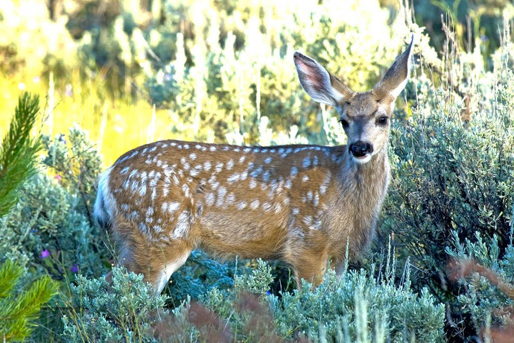 Fawn near Tower Junction in perfect light