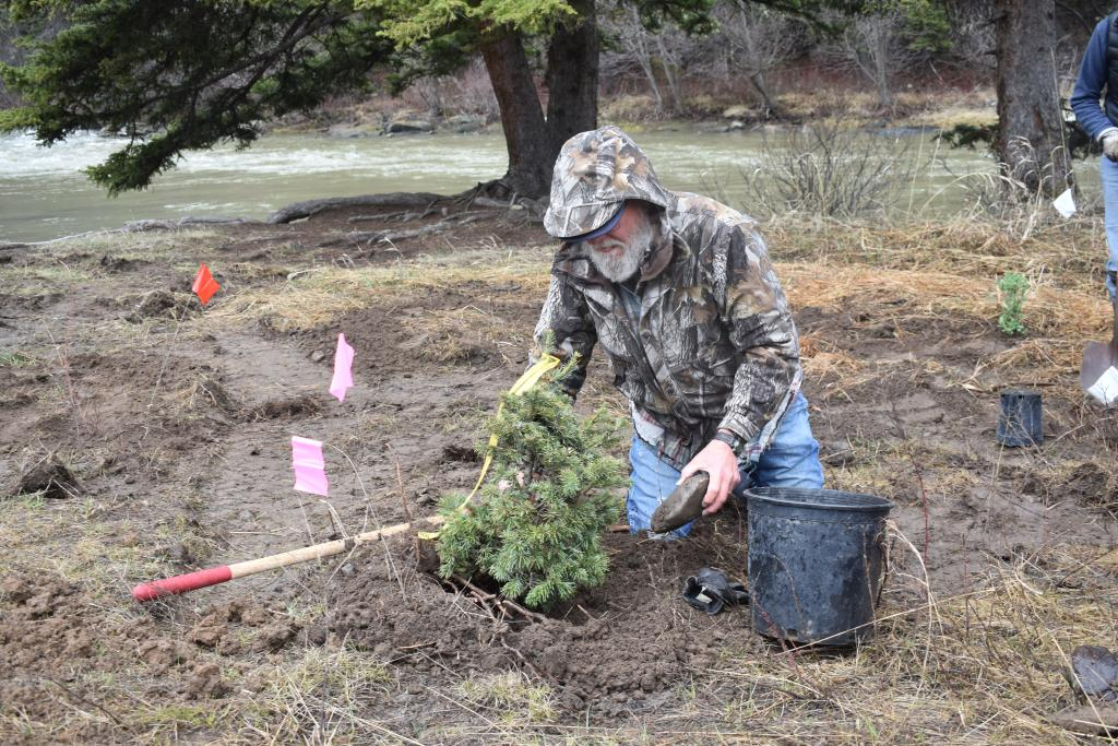 """Former Yellowstone National Park scientist Dan Mahony spent the morning of May 1 planting a number of native plants in an ongoing project aimed at restoring the banks of the Gallatin River at Moose Creek. Mahony spent more than three decades working for YNP, studying among many things, aquatic ecology. Google """"Dan Mahony Yellowstone National Park"""" to read some of the studies he's done. PHOTO BY JOLENE PALMER"""