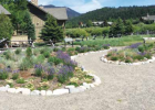 A look at the beautiful Crail Ranch garden, the site of the Trout-Friendly Landscape Tour. PHOTO BY AUSTIN SAMUELS